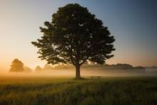 Kurs i mindfulness och självmedkänsla start 20/11, 4 tillfällen