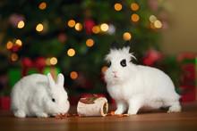 Fressnapf setzt einzigartiges Zeichen: Tiere gehören nicht unter den Christbaum