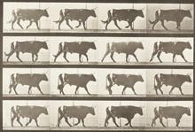 Föreläsning 11/9: Lantbruksdjuren i konst och litteratur