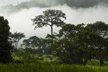 Skoven skal have en plads i klimaforhandlingerne