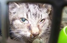 Lokal ildsjæl hjælper kattene i Maribo