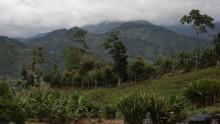 Nespresso markerer 14 års parløb med Rainforest Alliance-certificering på kafferør