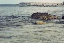 """""""Skarpsillsprojektet"""" gav viktig kunskap om ekosystemet i Östersjön"""