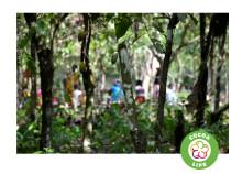 Mondelēz International expanderar sitt hållbarhetsprogam 'Cocoa Life' för att stoppa skogsskövling