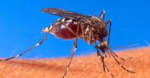 Det behövs ett giftfritt komplement till kemisk bekämpning av mygg