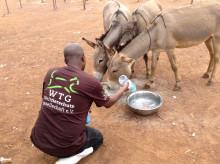 Zur UN-Klimakonferenz: Von Flut bis Dürre – Tiere sind die traurigen Verlierer der extremen Klimaveränderungen (Beispiele aus Tansania und Indien)