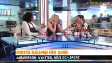 Väsby Djursjukhus på Aftonbladet TV: Första hjälpen för ditt djur