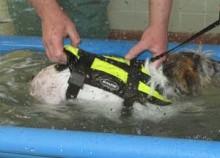 Rehabilitering av hund och katt