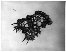 Konst inspirerad av amöbor och bakterier