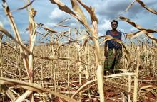 Klimatilpasning skal prioriteres for at redde liv og stoppe konflikter