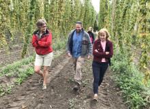 Humle på återtåg i Skåne – nu behövs intresse från de lokala bryggerierna