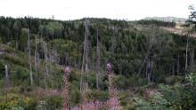 Seminarium: Skogsbruket och artskyddsförordningen, 8 dec