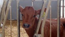 Seminarium 17 april: Anpassning av djurhållning till ett förändrat klimat