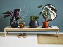6 gode grunner til fylle huset med grønne planter