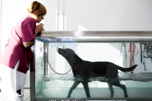 Agria stöttar forskning om knäledssjukdomarnas epidemiologi hos hund