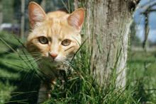 Nu lanseras Hemlösa katters vecka