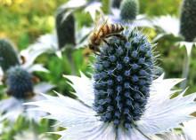 Dags för bina att invintra