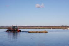 Skövdeforskare utvärderar restaureringen av Hornborgasjön