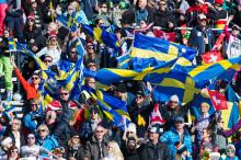 Alpina landslagets träningsgrupper 2019/2020