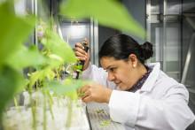 Laboratoriet för organisk elektronik växer med material från skogen