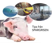 Tips från Spargrisen