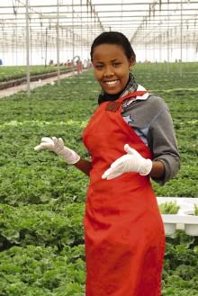 Världspremiär - Fairtrade-märkta julstjärnor