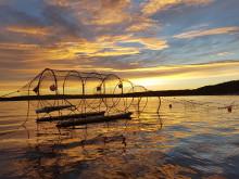 Framgångsrika fiskfällor internationell succé
