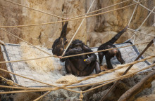 Kreativ återanvändning miljöberikar djuren på Kolmården