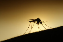 Så skyddar du dig bäst mot myggen i sommar!