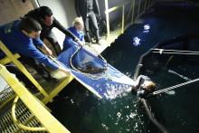 Fem nya hajar till Universeum