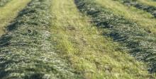 Biomestat selvittää: Ylimääräinen lanta energiaksi ja lannoitteeksi