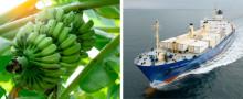 Nygammal trafik från Ecuador och Dominikanska Republiken direkt till Helsingborgs Hamn