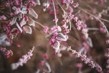 Vintertips vid rosacea – så tar du hand om din hud
