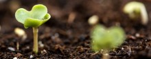 BASF er førende inden for klimabeskyttelse på global skala