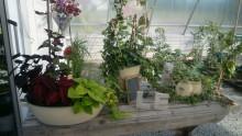 Nu är Hälsans trädgård som allra vackrast
