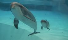 Delfin född på Kolmården