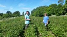 Mester Grønn først med norske økologiske peoner
