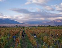 Wineworld inleder samarbete med argentinska Bodega Colomé & Bodega Amalaya!