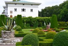 Finjamur bygger kongelig hage