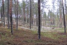 Stenhård konkurrens om geologiskt pris – Morafältet nominerad
