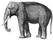 Barbros blogg: Om elefanter, Assar Lindbeck och Bertil Ohlin (FP)