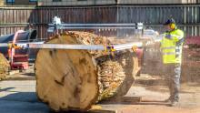 STIHL MS 880 i unikt hållbarhetsprojekt  när 300 årig ek skulle förädlas
