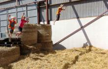 Öppen gård med Skånemejerier i sommar