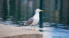 Lösningar för djuren i hållbara städer