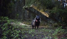 Internationell konferens om mårdhund/invasiva rovdjur, 16-18 juni.