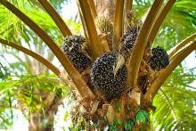 Kiilto sitoutunut siirtymään vastuullisesti tuotettuihin kasviöljyjohdannaisiin pohjautuviin raaka-aineisiin