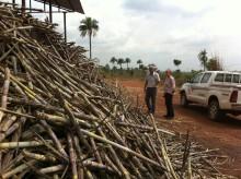 Addax Bioenergy blir FN:s första Clean Development Mechanism-projekt i Sierra Leone