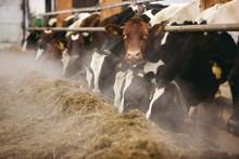 Norrmejerier agerar i mjölkkrisen