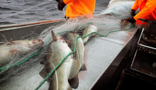 A new May record for codfish exports