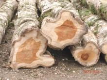 Kautschukpreise leiden unter Überangebot - Warum Holzpreise stabil bleiben